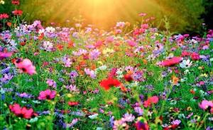 Çiçek_Tarlası_@pure_p4