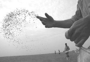 Hayat ekilen tohumla yenilenir